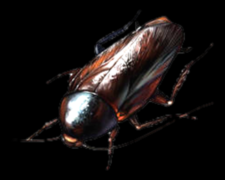 Image of Large Roach