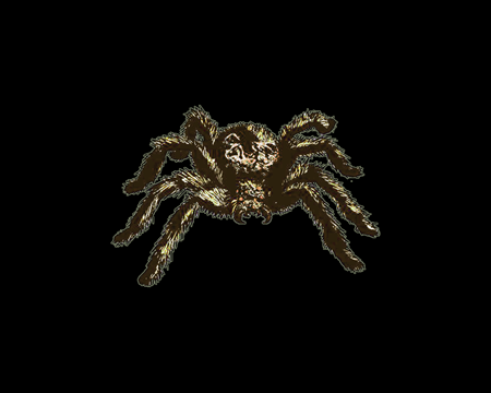 Image of Small Spider