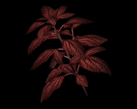 Image of Red Herb