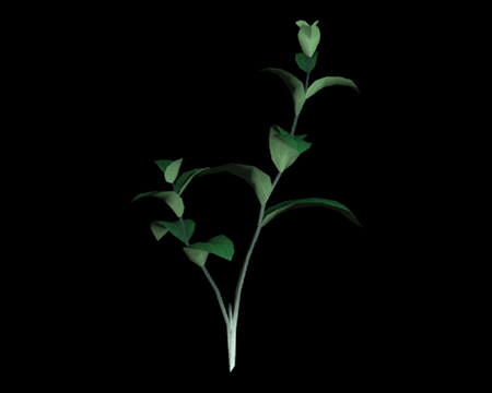 Image of Green Herb