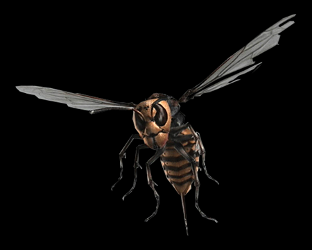 Image of Giant Wasp