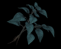 Image of Blue Herb