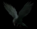 Image of Crow