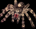 Image of 5 Giant Spiders