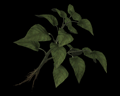 Image of 1 Green Herb