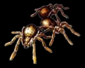 Image of Small Spiders