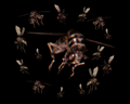 Image of Bug Swarm