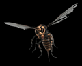 Image of ∞ Giant Wasps