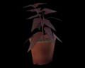 Image of 1 Red Herb